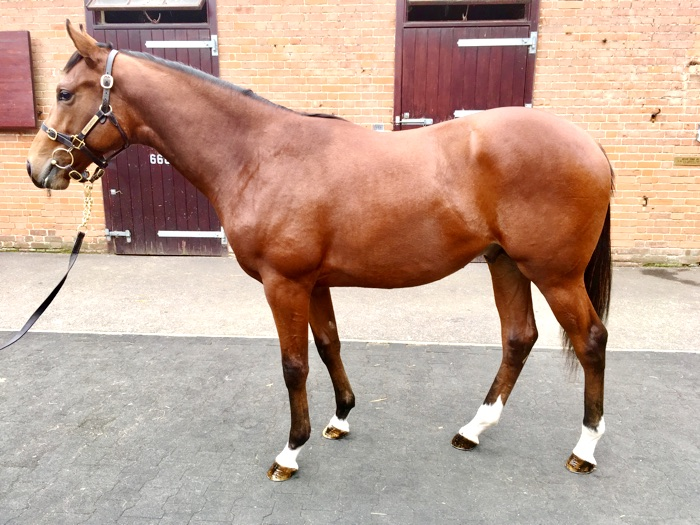 LOT 603 - Exceed And Excel (AUS) / Eclaircie (IRE) B.C.