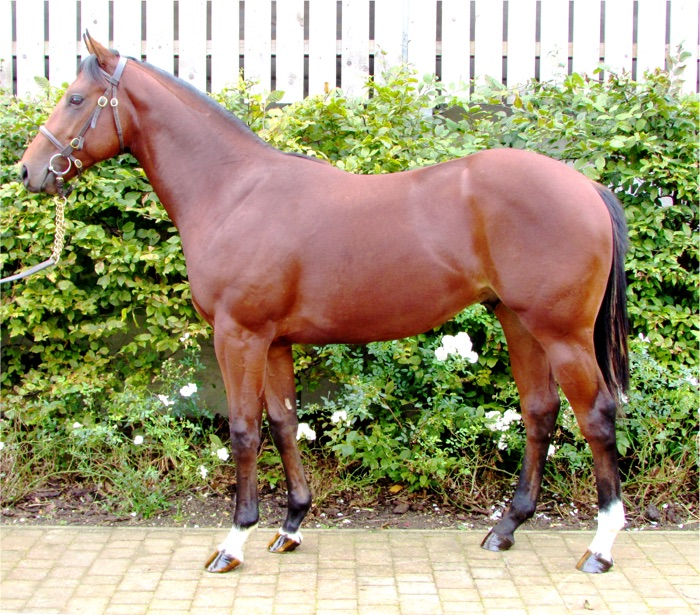 LOT 744 - Holy Roman Emperor (IRE) / Inagh River (GB) B.C.